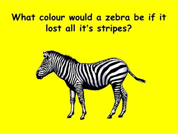 zebra-thunk1
